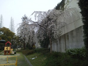 NEC_0129.JPG